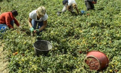 Schiave d'Italia – Donne, caporali e sfruttamento disumano